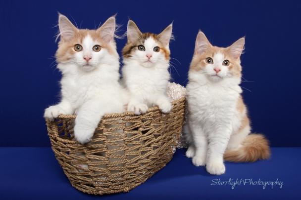 Featherland kittens
